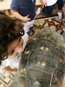 Bambina interagisce con tartaruga
