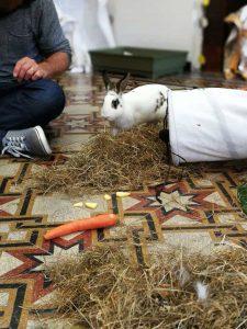 Bambini interagiscono con un coniglio