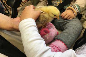 Bambini interagiscono con un pulcino